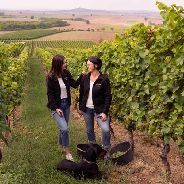 Live-Tasting Weingut Gröhl - Herbst 2021 - Wir nehmen euch mit