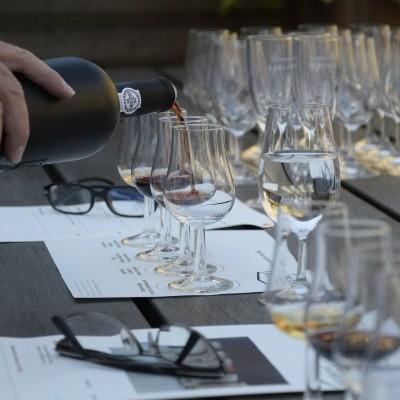 Weinseminar - Einführung in Speise & Wein